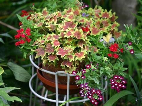outside flower arrangements outdoor flower pot arrangement photos