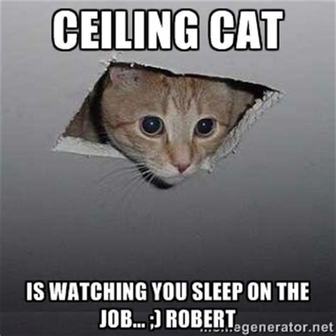 Sleeping Cat Meme - sleeping cat meme generator image memes at relatably com