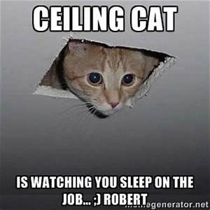 SLEEPING CAT MEME GENERATOR image memes at relatably.com