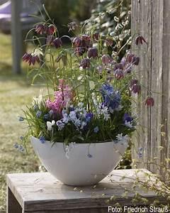 Schalen Deko Ideen : gro e schale bepflanzt mit verschiedenen zweibelblumen ~ Whattoseeinmadrid.com Haus und Dekorationen
