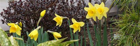 Der Garten Im März  Das Frühjahr Beginnt  Tipps & Tricks