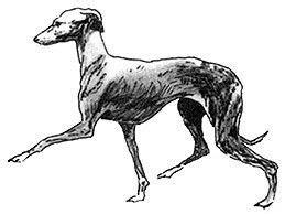 foto de 21 best Dogs of my heart images on Pinterest Italian