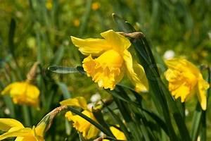 Blumen Im Frühling : narzisse blumen im fr hling stock foto colourbox ~ Orissabook.com Haus und Dekorationen
