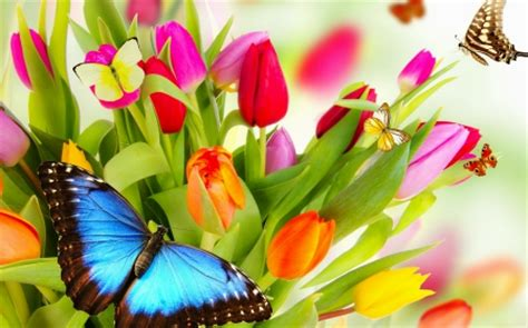 spring background  abstract background wallpapers