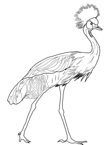 black crowned crane coloring page supercoloringcom