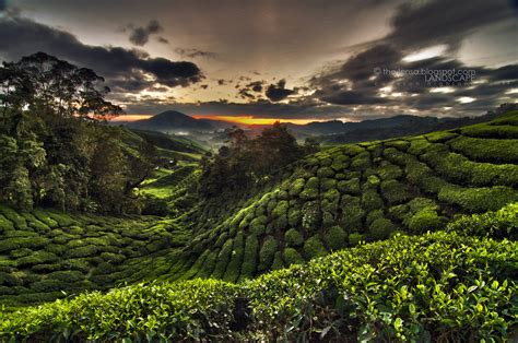 Cameron Highland And Mossy Forest Mohyiddin Lensa Photography