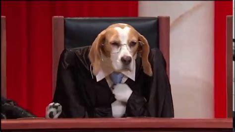 john oliver  week tonight supreme court version dog
