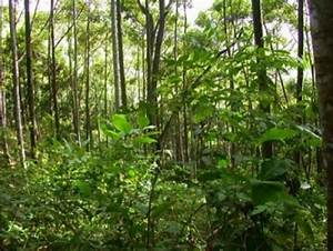Restoration Of A Tropical Rain Forest Ecosystem Successful ...