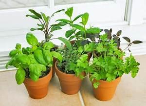 Kräuter Für Den Garten : pflanzen blumen kakteen f r garten balkon kr uter f r den garten ~ Eleganceandgraceweddings.com Haus und Dekorationen