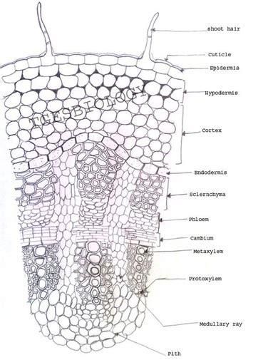 preparation biologyisc