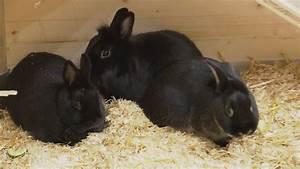 Was Ist Bei Kopfstützen Zu Beachten : was ist bei der haltung von kaninchen zu beachten telebasel ~ Orissabook.com Haus und Dekorationen