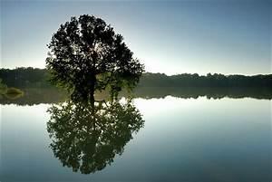 Baum Am Wasser : hochwasser forum f r naturfotografen ~ A.2002-acura-tl-radio.info Haus und Dekorationen