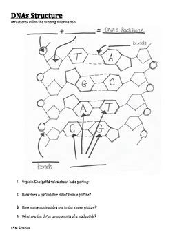 Dna Structure Graphic Organizer By Lsmscience  Teachers Pay Teachers