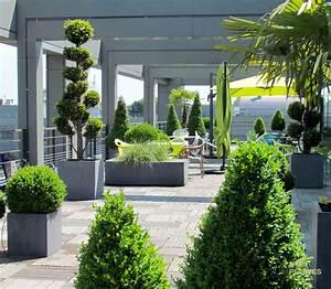 Plantes Grimpantes Pot Pour Terrasse : plantes pour terrasse meilleures images d 39 inspiration ~ Premium-room.com Idées de Décoration