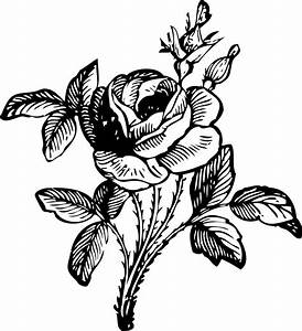 Single Rose Black And White | Clipart Panda - Free Clipart ...