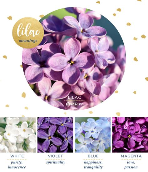 flower color meanings lilac meaning and symbolism ftd