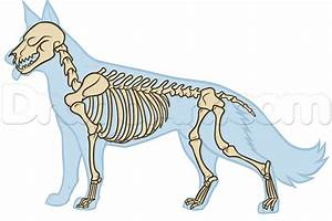 Dog Anatomy Drawing, Step by Step, Pets, Animals, FREE ...