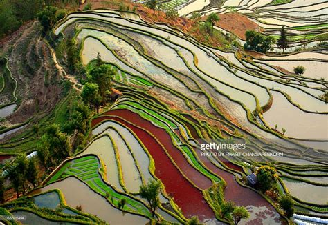 yuanyang rice terraces yuanyang rice terrace stock photo getty images