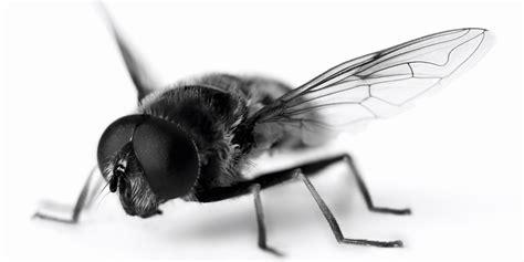 nontoxic ways   pests  bay  summer huffpost