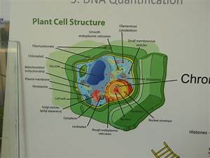 Genetically Modified  Gm  Food  U0026 Related Issues  Gm Technology