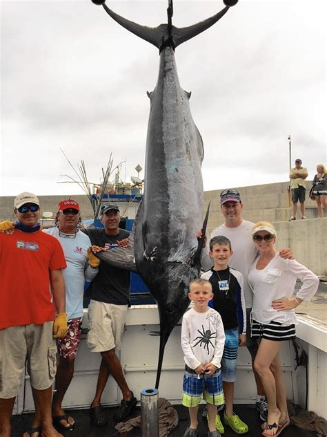 marlin florida cup fishing outdoors