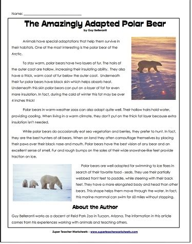 polar bear article