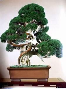 Bonsai Baum Garten : 560 besten bonsai bilder auf pinterest bonsai ~ Lizthompson.info Haus und Dekorationen