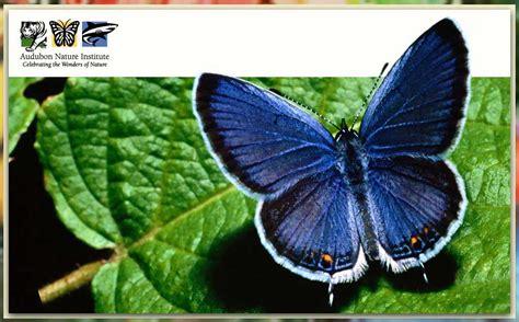audubon butterfly garden and insectarium audubon butterfly garden insectarium experience new