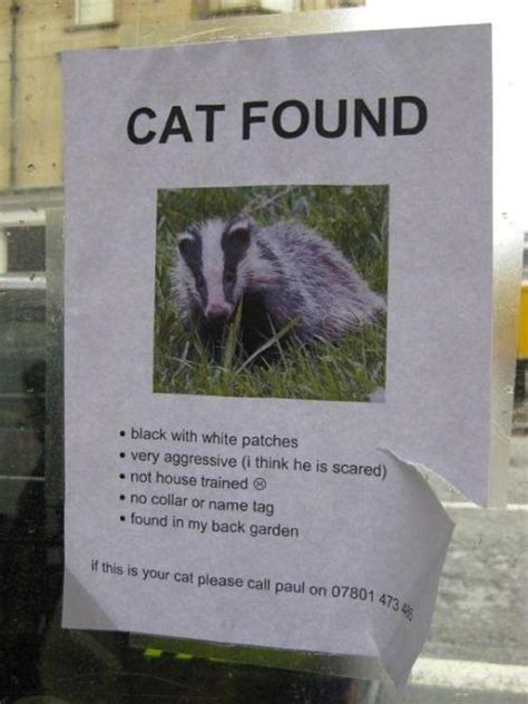 Lost Cat « Why Evolution Is True