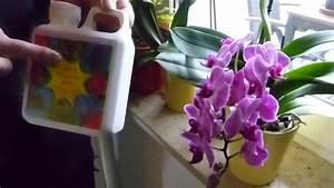 Dünger Für Orchideen : oscorna d nger orus f r orchideen hier im video erf hrst ~ A.2002-acura-tl-radio.info Haus und Dekorationen
