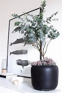 Pflanzen Für Drinnen : mit tipps f r eukalyptus drinnen wohnung berlin pinterest pflanzen garten und ~ Frokenaadalensverden.com Haus und Dekorationen