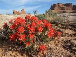 of the valley flower desert wildflower seminar moab utah
