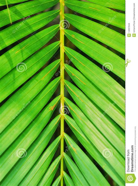 leaves  symmetry stock photo image  ecology branch