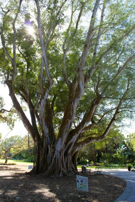 selby botanical gardens selby botanical gardens has a national collection of