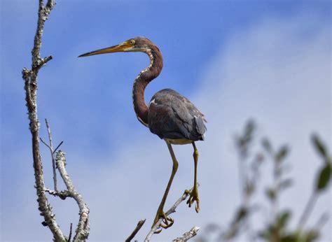 birds on the brain birding coastal south carolina with