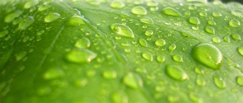 green lava l green cleaning services montreal laval south