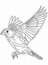Coloring Pages Canary Flight Bird Flying Drawing Grosbeak Birds Printable Finch Getdrawings Colors Sparrow Mycoloring Recommended sketch template