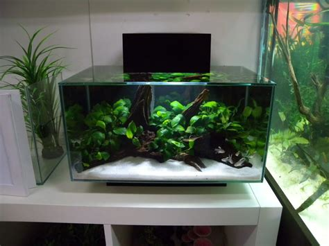 Fluval Edge Aquascape by 3 Fluval Edge Shop Displays Aquarium Aquarium Fish Tank