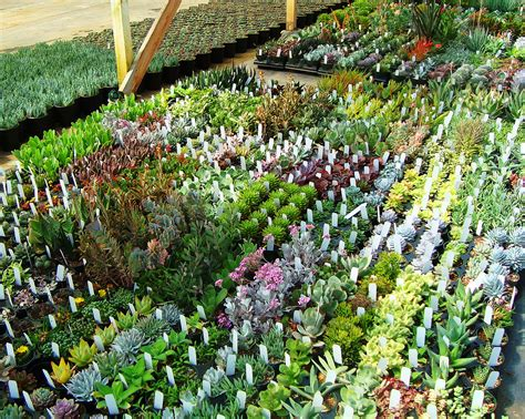 succulents nursery 301 moved permanently