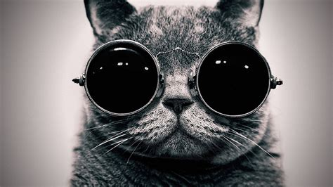 cool for cats cool cat hd wallpapers