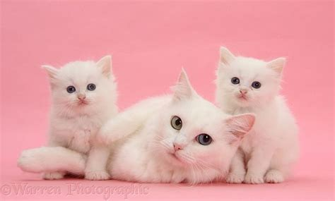 images  cats  pink  pinterest cute cats