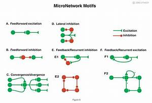 Introduction To Neurons And Neuronal Networks