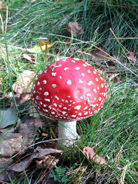 Pilze Im Garten Vernichten by Pilze Im Rasen Giftig Pilze Im Rasen Eine Dokumentation
