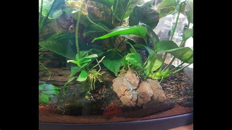 deko für aquarium diy bepflanzte aquarium deko