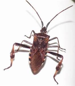 Käfer In Der Wohnung Bestimmen : wer kennt den namen von diesem k fer insekten bestimmung ~ Eleganceandgraceweddings.com Haus und Dekorationen