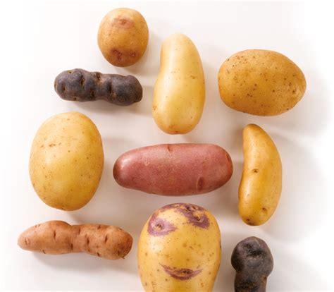 pommes de terre 169 du centre