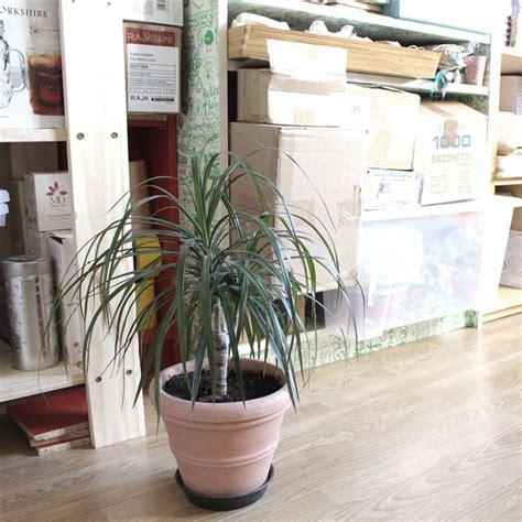 roger bureau bureau exploratology roger plante exploratology