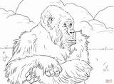 Gorilla Mountain Coloring Coloriage Gorille Printable Cartoon Cliparts Coloriages Imprimer Gorillas Colorare Template Pianura Animals Sketch Montagnes Disegno Range Sheets sketch template