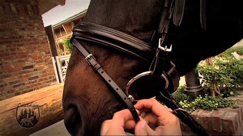 basics mit kati trense ans pferd anpassen youtube
