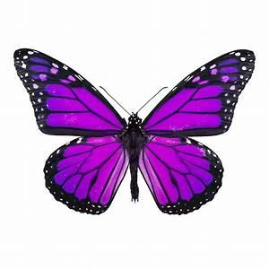 Butterfly | Beast Wars Transformers Wiki | FANDOM powered ...